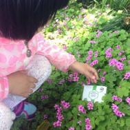 溪皇薏湿茶纯天然健康饮品